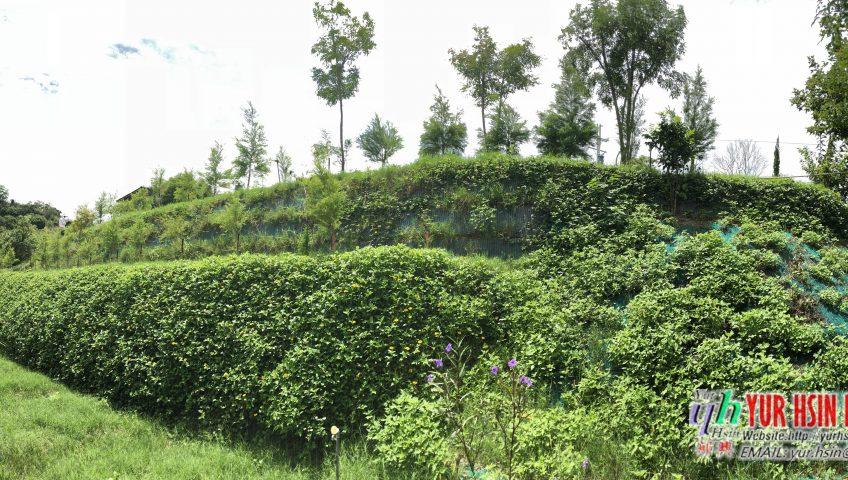 Đã hoàn thiện kè sinh thái hoàn thiện phủ cây xanh